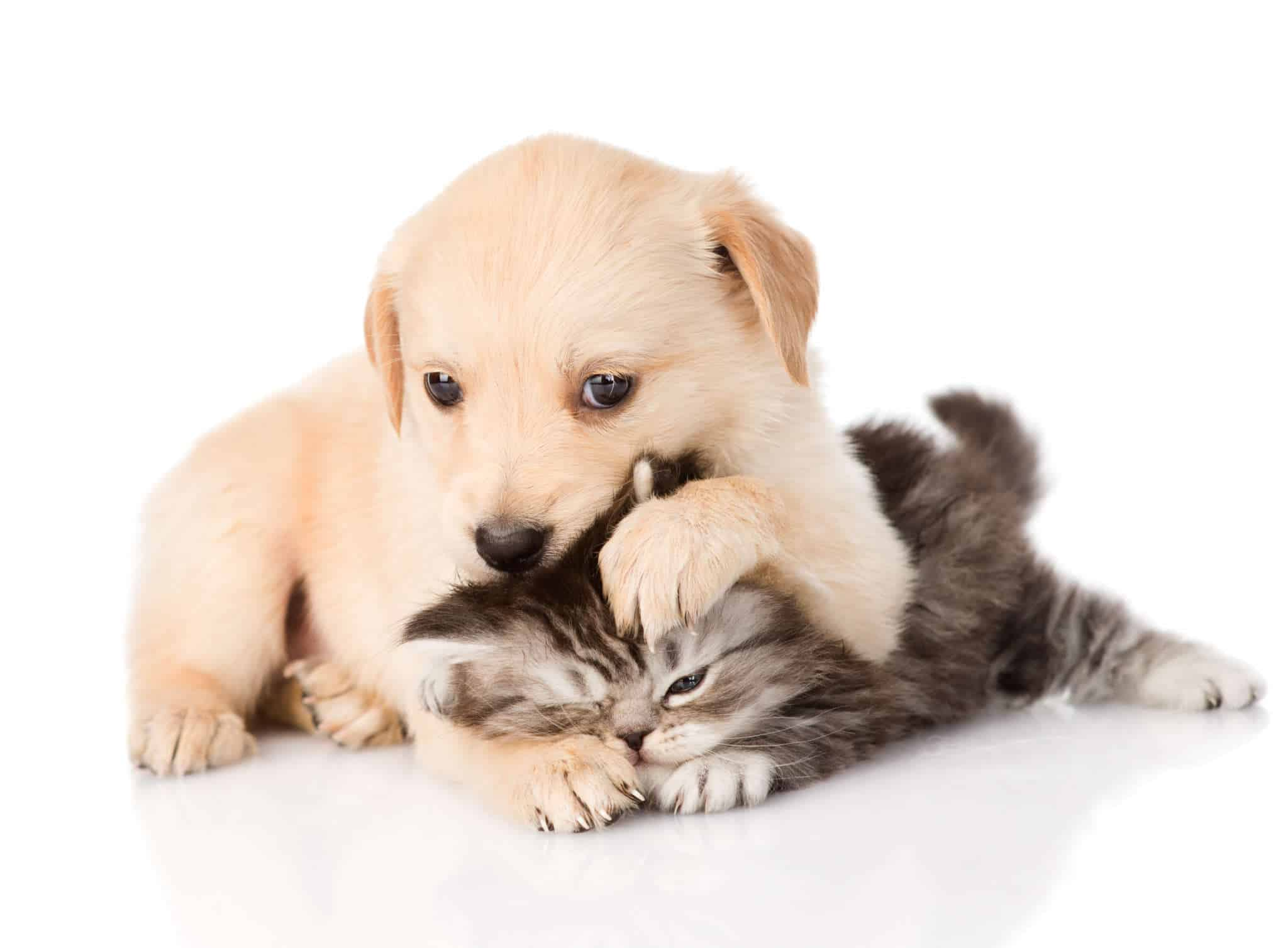Conseils Betises Chiots