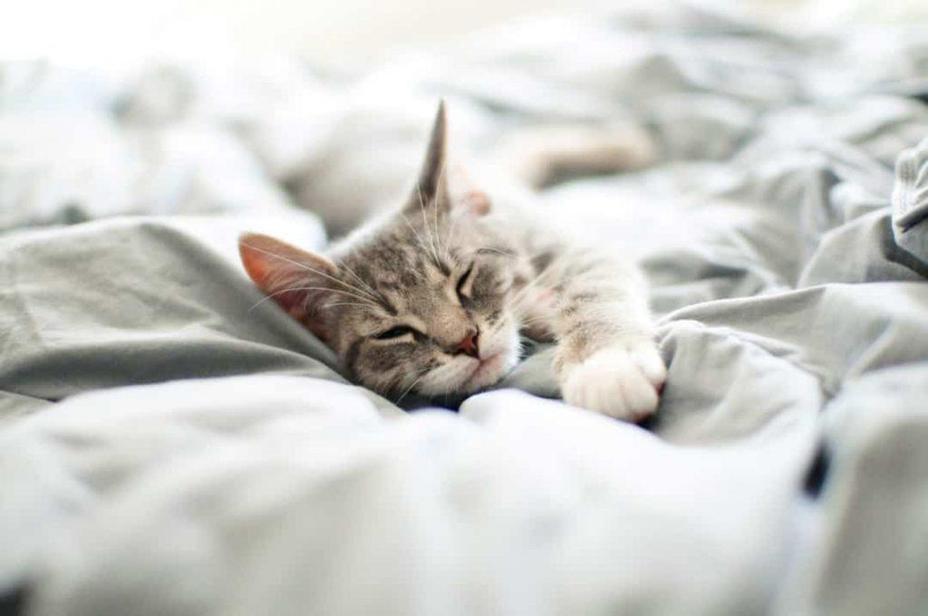 Cute Dog Stretching Wallpaper Pourquoi Les Chats Dorment Ils Autant Autour Des Animaux
