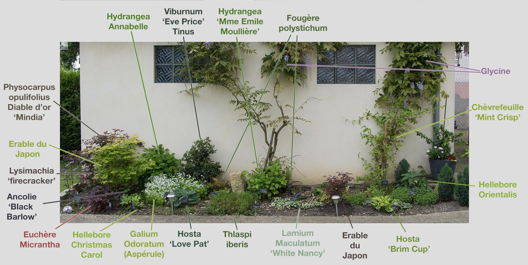 creer un massif de plantes rampantes