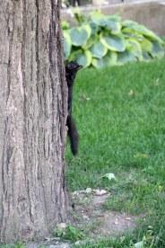 coucou l'écureuil