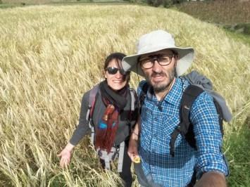 dans un champ de blé près du Lechero