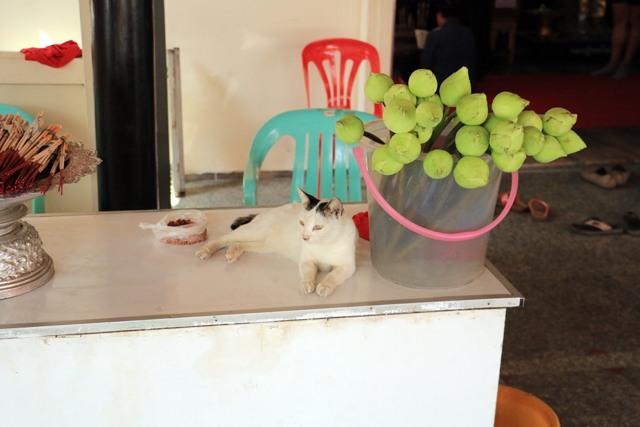 le chat des lotus