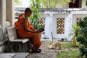 le moine et son chat