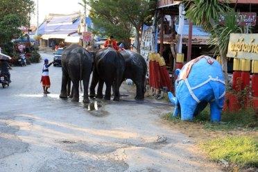réserve d'éléphants à Ayutthaya
