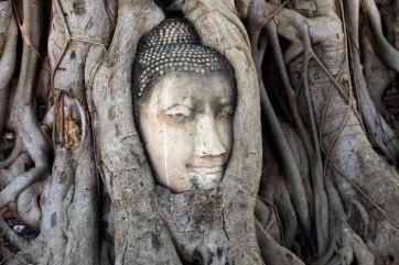 la fameuse tête dans les racines de l'arbre à Wat Mahathat à Ayutthaya