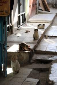 La Tunisie, le pays des chats
