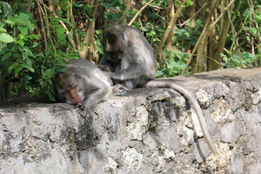Joëlle et Philipp, deux habitants du temple d'Uluwatu