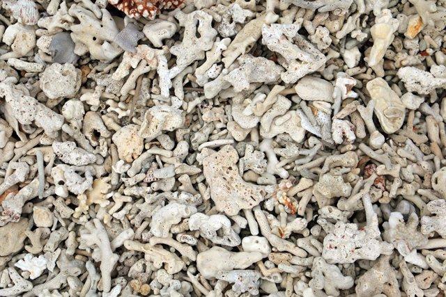 des restes de coraux morts sur la plage de Gili Meno