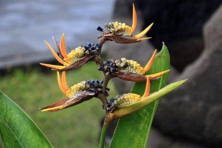 joli fleur sur le site de Prambanan