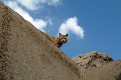 un chat persan :) dans vieille ville de Yazd - l'autre ailleurs en Iran, une autre idée du voyage