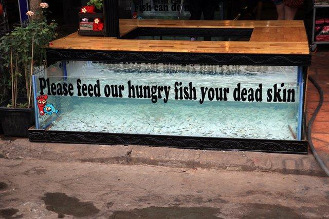 donner à manger la peau morte de vos pieds à de poissons, ça vous tente ? à Siem Reap - L'autre ailleurs au Cambodge