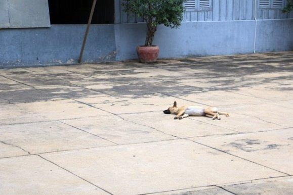 Musée du génocide Toul Sieng ou camp S 21 - L'autre ailleurs au Cambodge - L'autre ailleurs au Cambodge