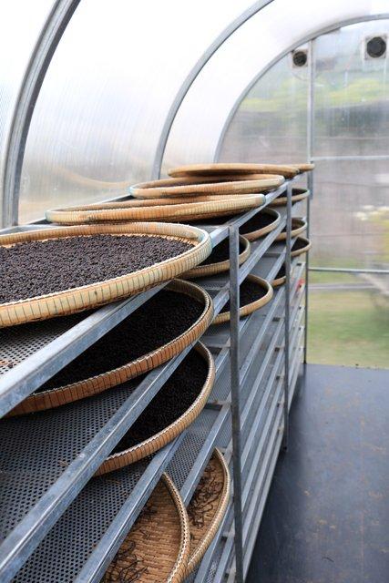 Séchoir à poivre. Sothy's ferme biologique cultivant le poivre