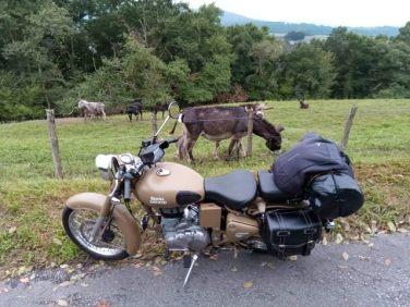 des ânes et quelques chevaux...dans le guidon (moto road trip) - l'autre ailleurs, une autre idée du voyage