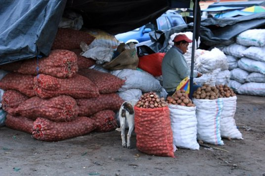 marché des pommes de terres (papas) - l'autre ailleurs, une autre idée du voyage