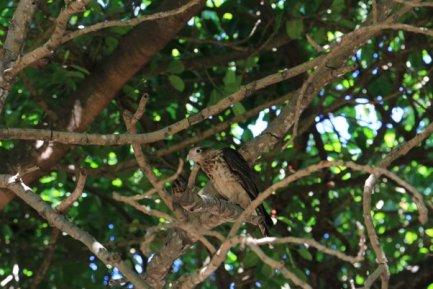 drôle d'oiseau à Carthagène des Indes - l'autre ailleurs en Colombie, une autre idée du voyage