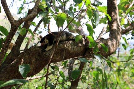 énorme écureuil sur le chemin de Dambulla Cave Temple - l'autre ailleurs au Sri-Lanka, une autre idée du voyage