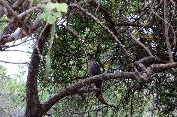 aigle dans la réserve de Kadula National Park, mon premier safari photos - l'autre ailleurs au Sri-Lanka, une autre idée du voyage