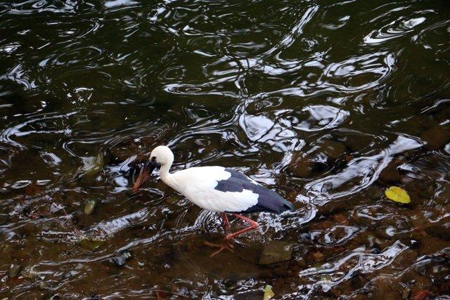 oiseau sur le lac de Kandy - l'autre ailleurs au Sri-Lanka, une autre idée du voyage