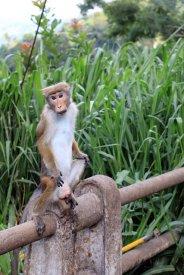 sur la route vers les éléphants, rencontre avec un petit singe - l'autre ailleurs au Sri-Lanka, une autre idée du voyage