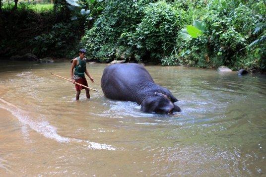 Elephant Experience NI ALLEZ PAS - l'autre ailleurs au Sri-Lanka, une autre idée du voyage - l'autre ailleurs au Sri-Lanka, une autre idée du voyage