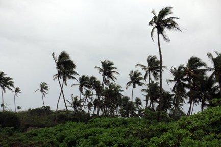 palmiers à Mirissa - l'autre ailleurs au Sri-Lanka, une autre idée du voyage