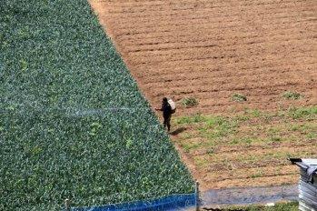 hum...pas terrible cette agriculture, près de Nuwara Elyia - l'autre ailleurs au Sri-Lanka, une autre idée du voyage