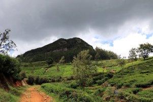 randonnée vers la cascade (Lover's leap Waterfall) dans les champs de thé, près de Nuwara Elyia - l'autre ailleurs au Sri-Lanka, une autre idée du voyage