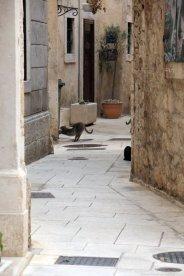 un chat s'étire dans la rue à Split - l'autre ailleurs en Croatie, une autre idée du voyage