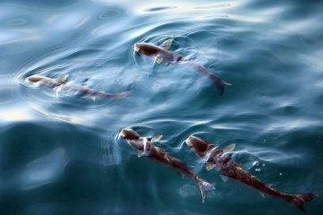 poissons à Zadar - l'autre ailleurs en Croatie, une autre idée du voyage