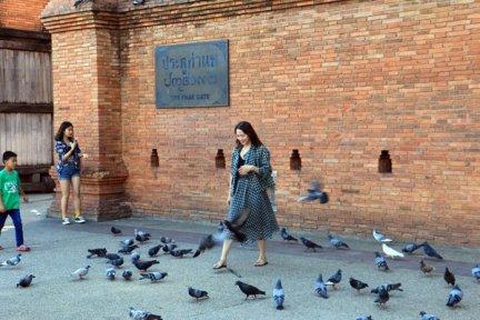 jouant avec les pigeons à l'entrée de la ville de Chiang Mai - l'autre ailleurs au Myanmar (Birmanie) et Thaïlande, une autre idée du voyage