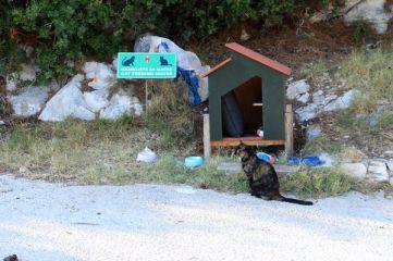 Tout comme à Dubrovnik, ici à Cavtat, beaucoup de chats très respectés - l'autre ailleurs en Croatie, une autre idée du voyage