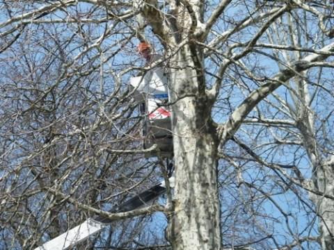 Elagage des arbres avec une nacelle de la ville