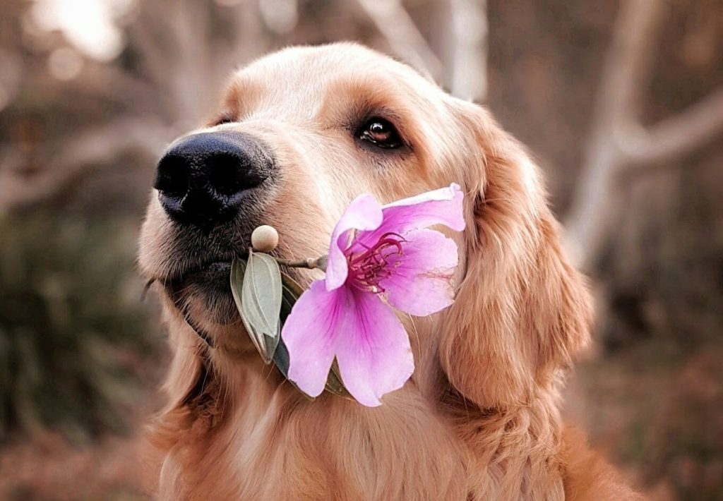 dog holding flower