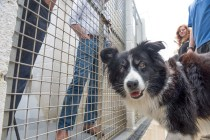 fly-collie-visits-inmates