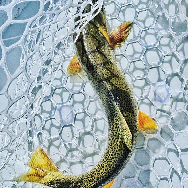 Fall is for fishing.  #seekthestoke #flyfishing
