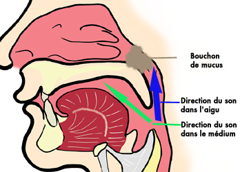 Bouche, pharynx et fosses nasales : direction du son