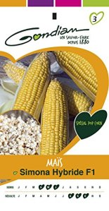 Gondian 513837 CP 3 Semences Mais Pop Corn Simona F1 Jaune 1 x 8,1 x 16 cm