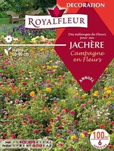 Royalfleur PFRH08685 Graines de Mélange de Fleurs ma Jachère Campagne Fleur 100 m²