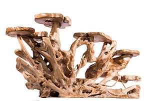 windalf Grand Fleur Fleur Banque L Bellariva: 200cm étagère Paravent main en racine rustique en bois