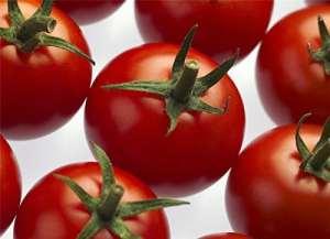 Il vous suffit de graines de l?gumes Bio???Tomate Cheramy RZ F1?(72?122) Gspp???125?graines