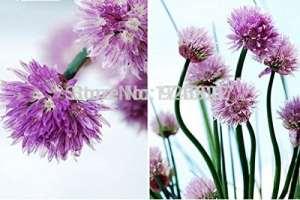 100pcs Concombre Seeds japonais Mini Concombre Légumes Graines Bio No-gmo Graines pour Home Garden