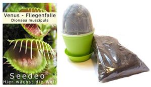 Seedeo Kit de culture de Dionée attrape-mouche (Dionaea muscipula)