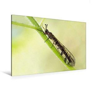 Ficelle à fourmis, 120 x 80 cm