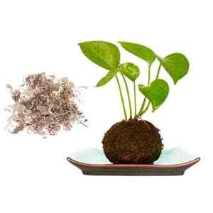 Pinkdose Water Moss Semis à Croissance Sã¨Che Paysage Matrix Ecologique Cache-Pot Plante SD-JQ