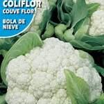 ROCALBA Semence coliflor Boule Neige 10ud
