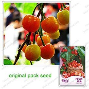 5 / Paquet Graines cerise Graines Fruits bio Bonsaï Graines Cerasus Pseudocerasus pour le bricolage jardin
