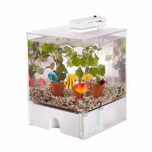 BOTANICLY | Plante aquatique – Waterworld Aquarium avec 2 éclairages LED colorés, 2 plantes aquatiques et 6 poissons en plastique | Hauteur: 20 cm