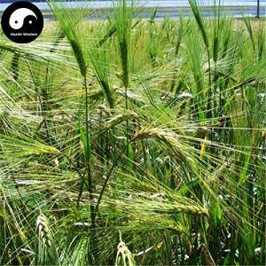 Shopmeeko Acheter Pin Rouge Arbre Semente 60pcs Planter Pinus Tabulaeformis Pour Pin Chinois
