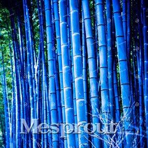 50 pcs / sac rares Graines Bleu bambou, jardin décoratif, Graines Herb Planteur Bambu Arbre pour Diy jardin